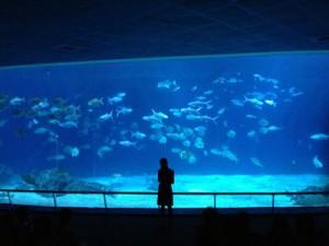 台湾,ケンティン,国立海洋生物博物館,水族館