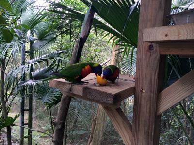 「鳥類生態公園(鳥類生態)」ゾーンでは、とっても近くで南国系の鳥が観察できます★