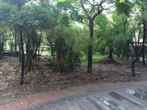 敷地内にある、幼稚園児のための生態公園?的な遊び場。
